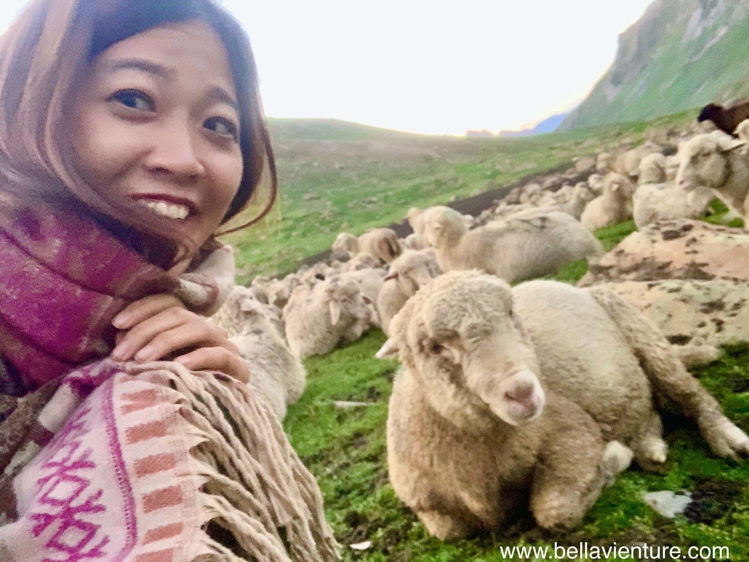 印度 India 北北印 North India 喀什米爾  Kashmir 八天七夜 健行 Nichnai Valley 與睡著的綿羊自拍