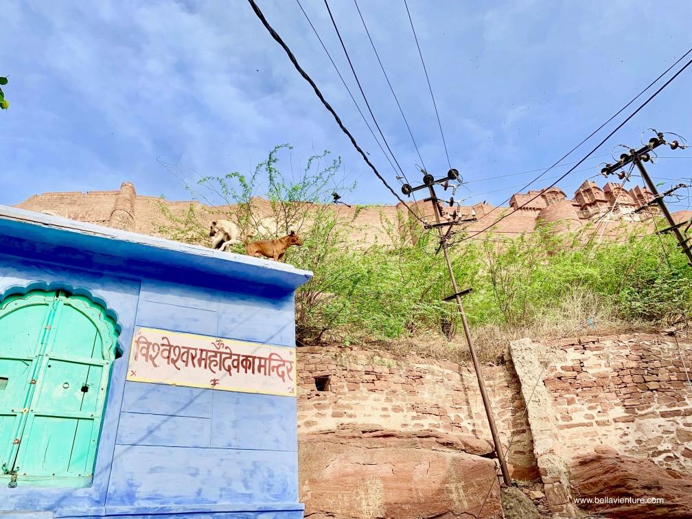焦特普爾 Jodhpur 藍色城市 Blue city 街道 street view