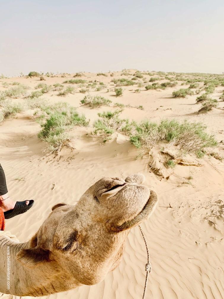 印度 india 賈莎梅爾 jaisalmer 東京宮殿 tokyo palace 沙漠駱駝行 camel safari