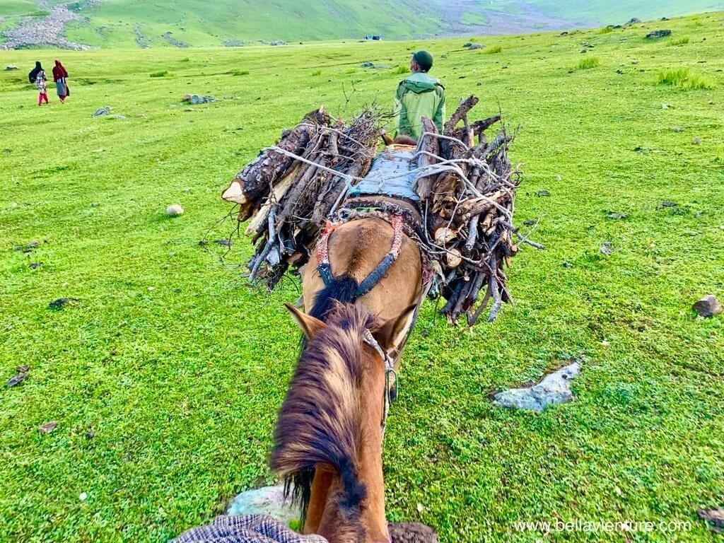 印度 india 喀什米爾 kashmir 大湖健行big lake treakking 捆滿枯枝的馬兒