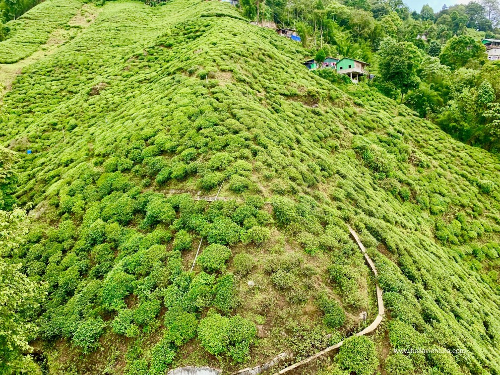 大吉嶺 茶園 印度 Darjeeling Rangeet Valley Passenger Ropeway 纜車