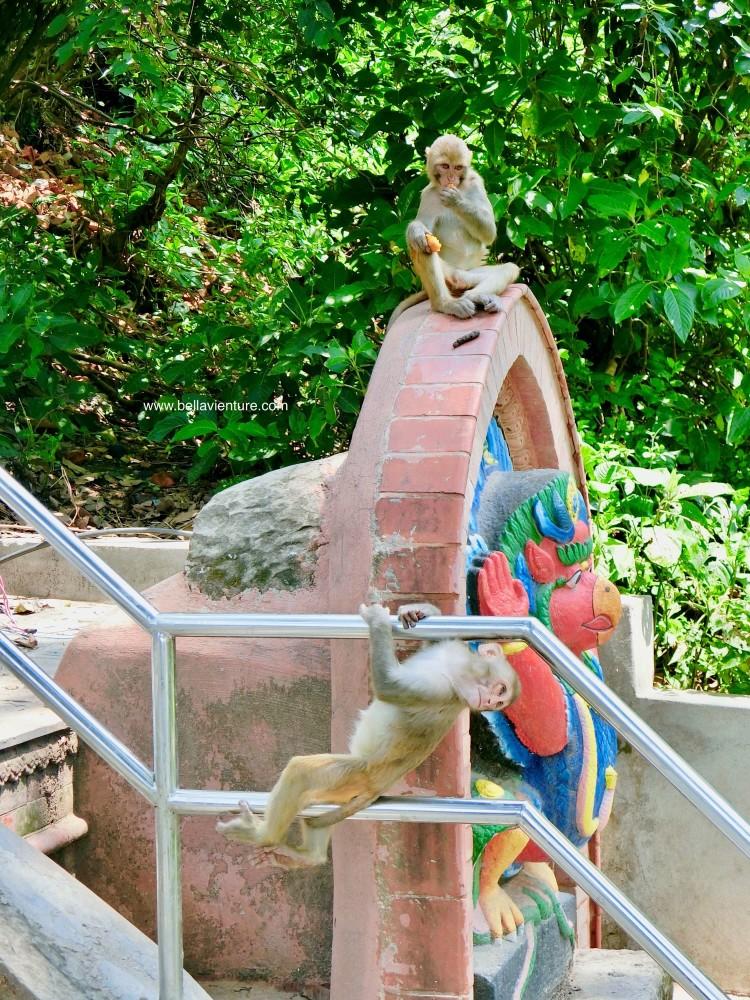 斯瓦揚布納特佛寺Swayambhunath猴廟 monkey temple 猴群 搶食物