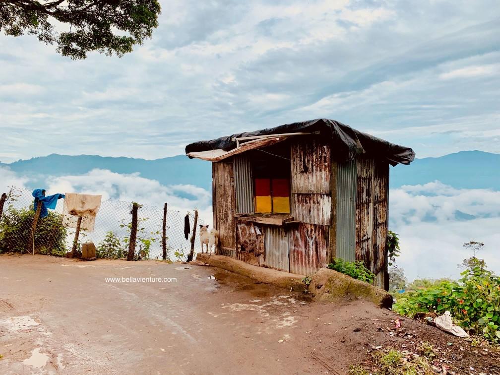 印度 大吉嶺 美景