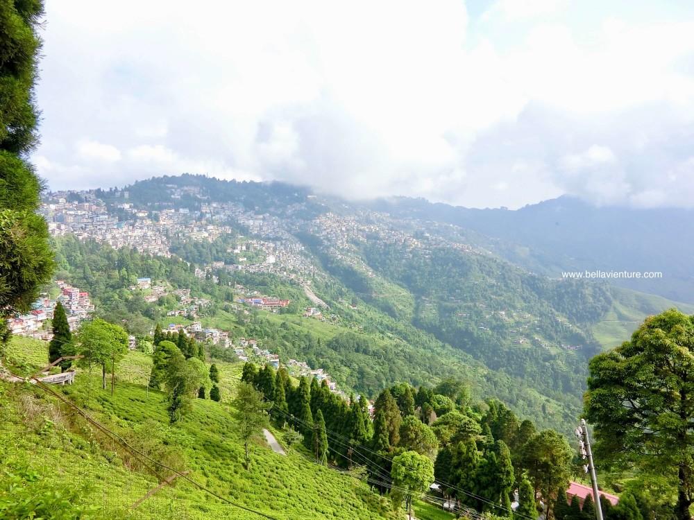 印度 大吉嶺 山景
