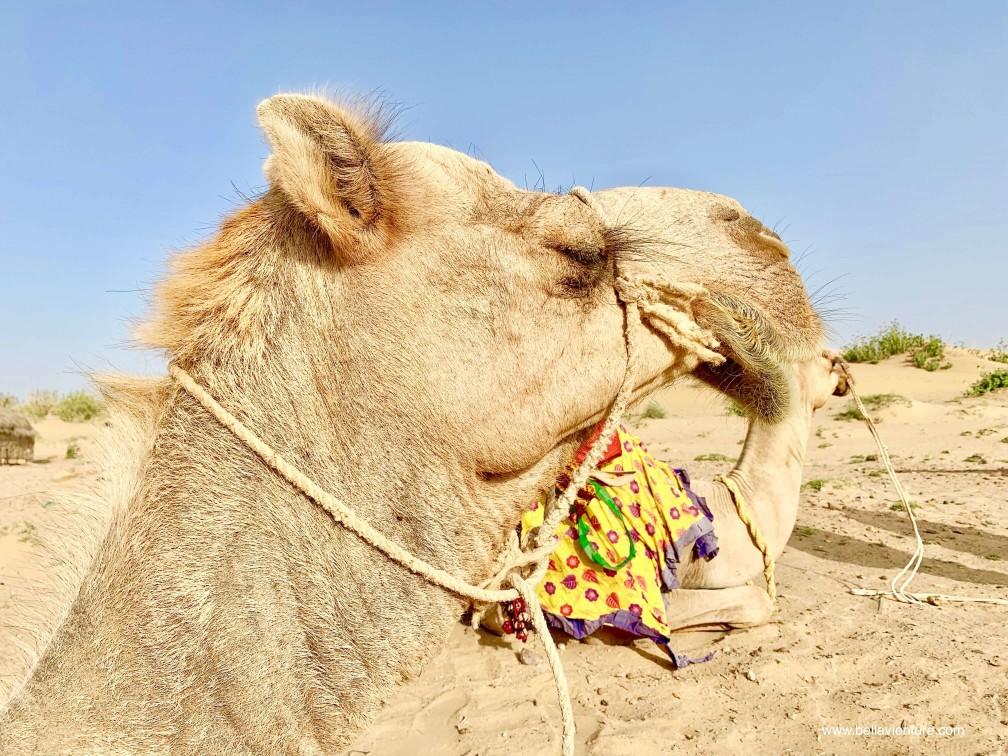 印度 india 賈莎梅爾 jaisalmer 沙漠 desert 駱駝 camel safari 日出 sunrise