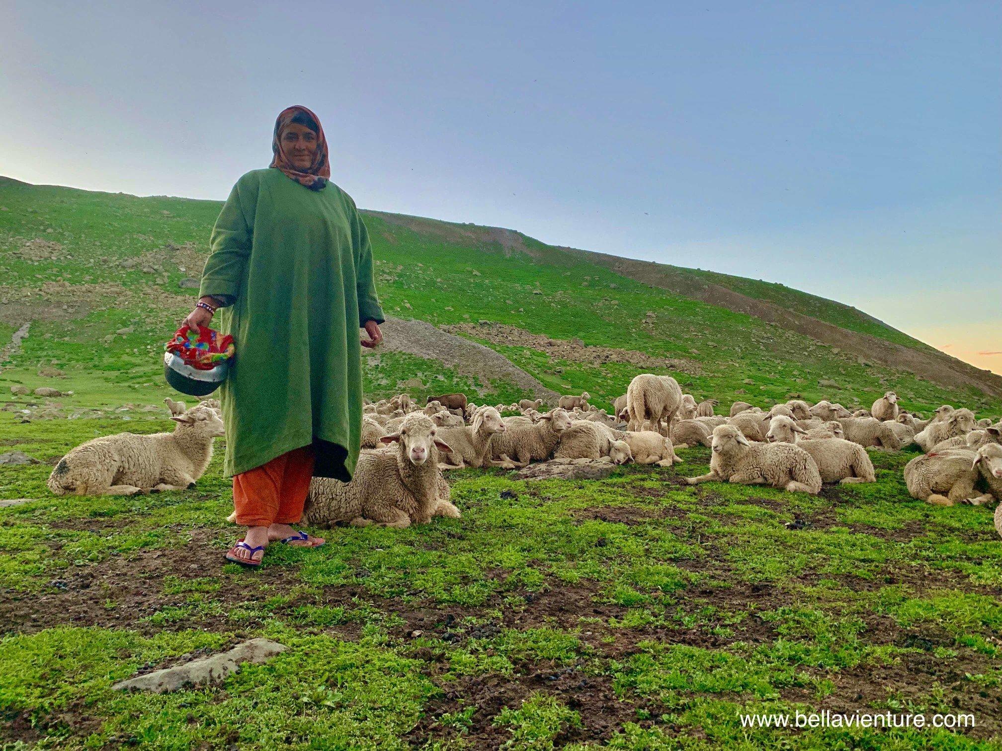印度 India 北北印 North India 喀什米爾  Kashmir 八天七夜 健行 Nichnai Valley 羊群與牧羊女