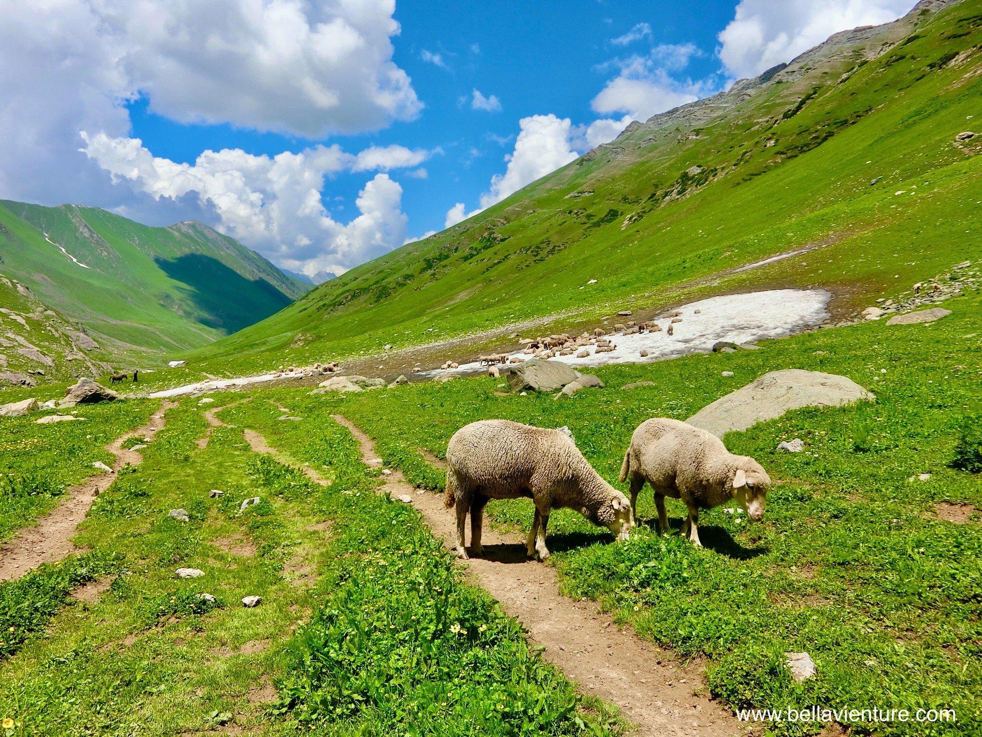 印度India 北北印 North India 喀什米爾 Kashmir 大湖健行 trekking 牧羊群