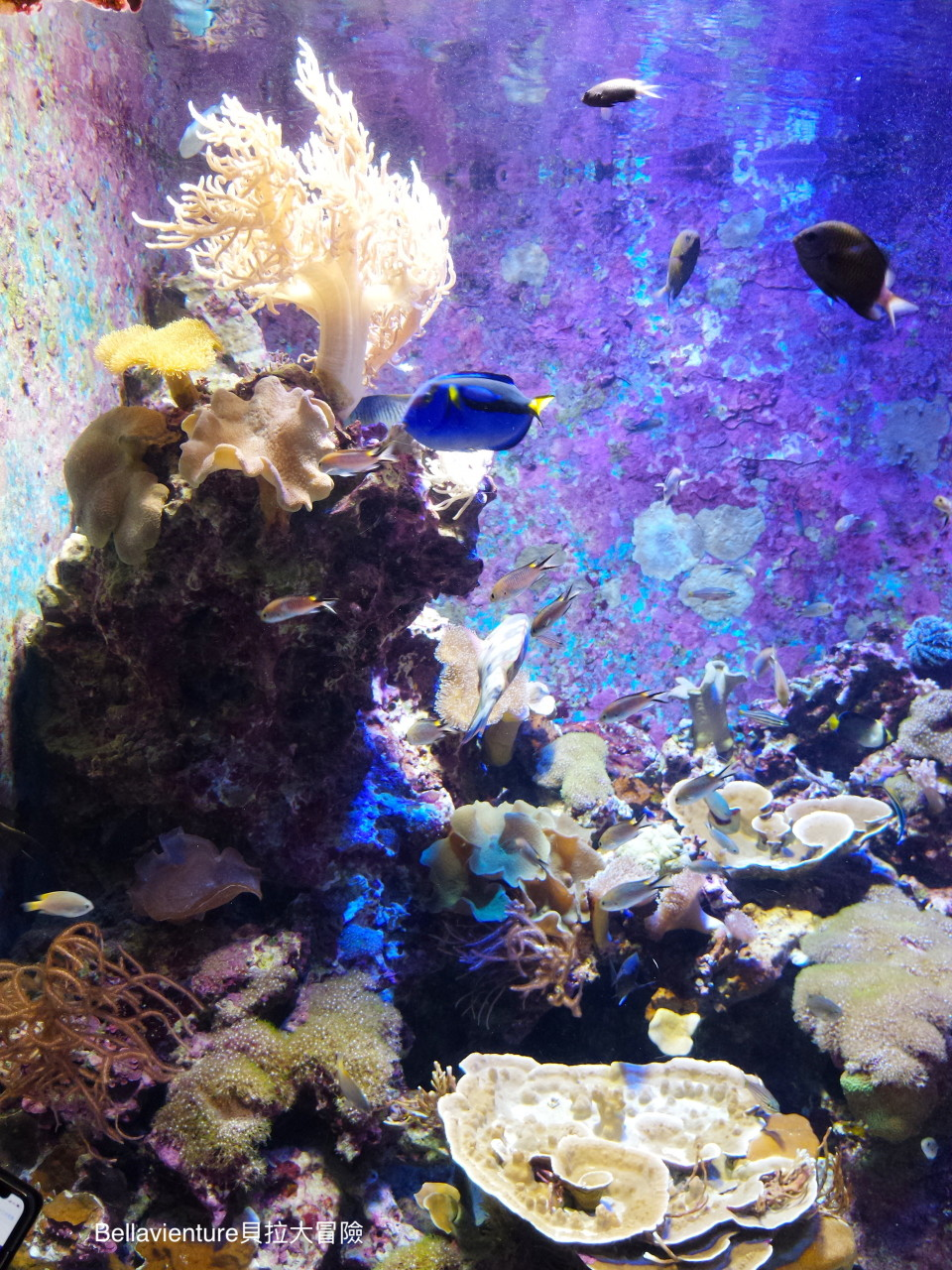 沖繩 美麗海水族館
