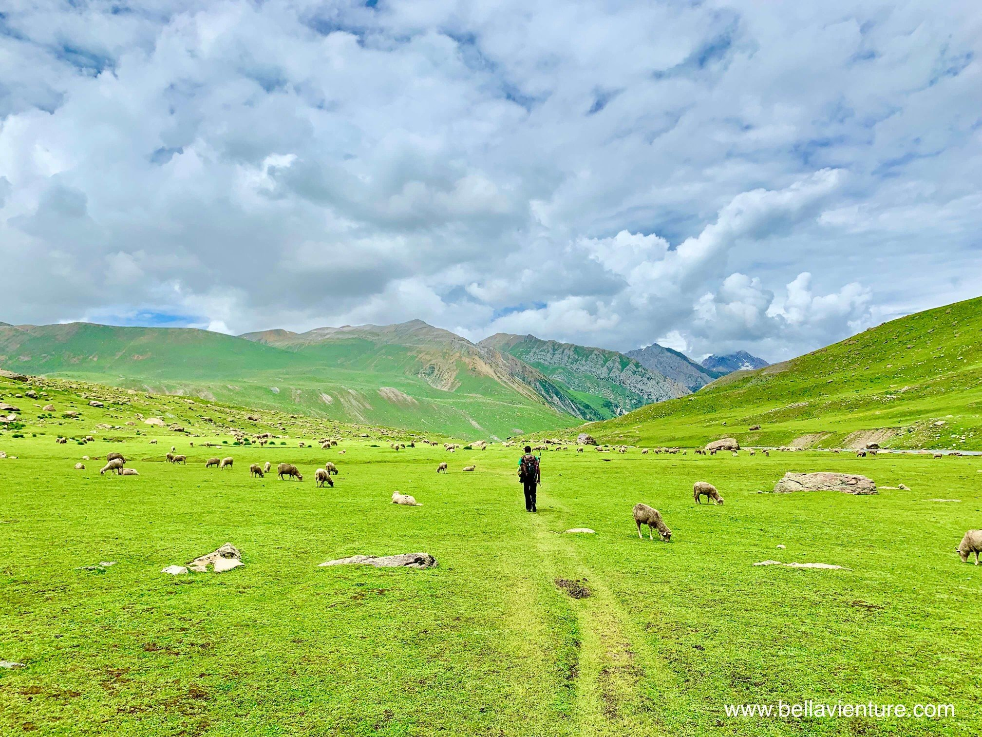 印度 India 北北印 North India 喀什米爾  Kashmir 八天七夜 健行 滿山谷的羊群