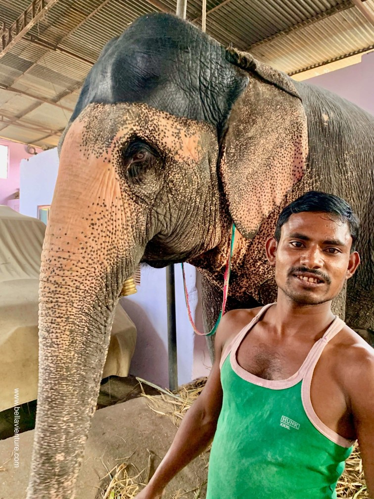 印度 india  齋浦爾 jaipur 大象之家 elephant house