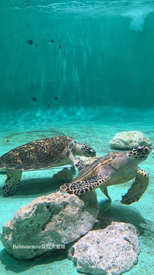 沖繩 美麗海水族館 海龜