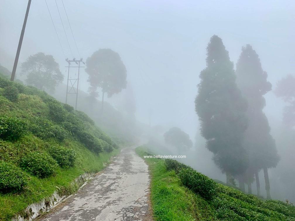印度 大吉嶺 茶園 天氣