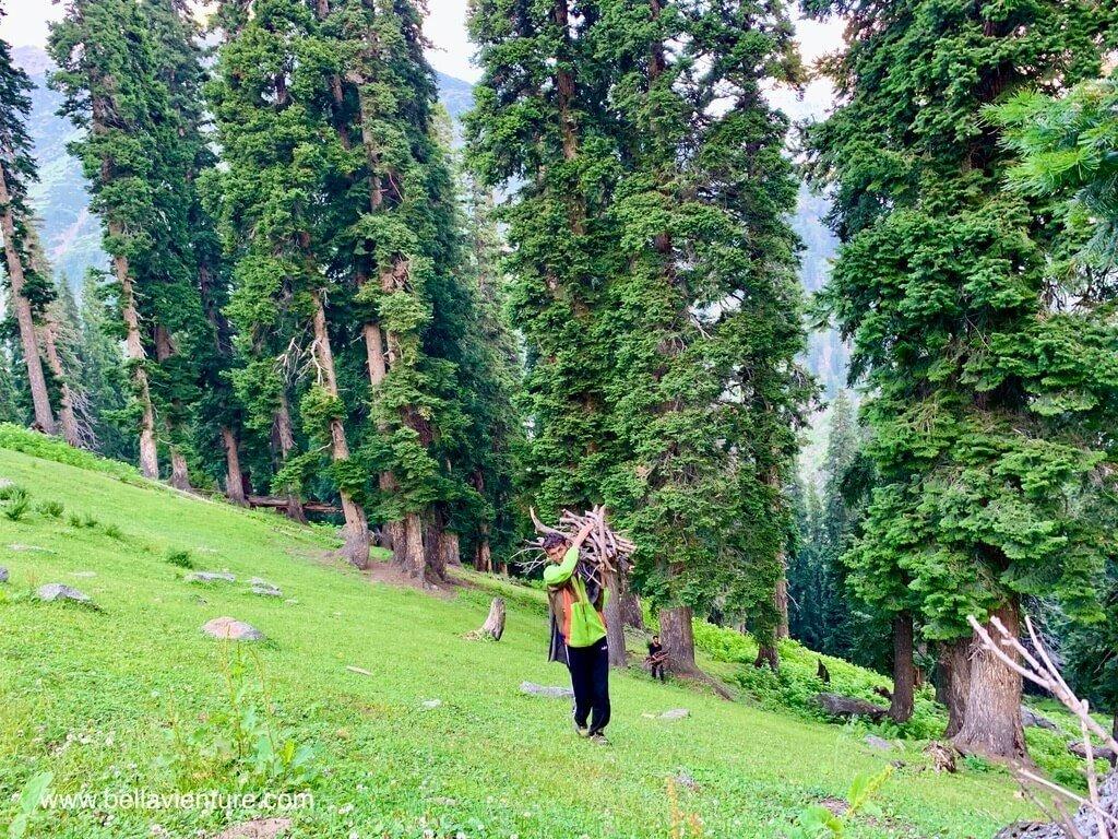 印度 india 喀什米爾 kashmir 大湖健行big lake trekking Manzoor大力士搬枯枝