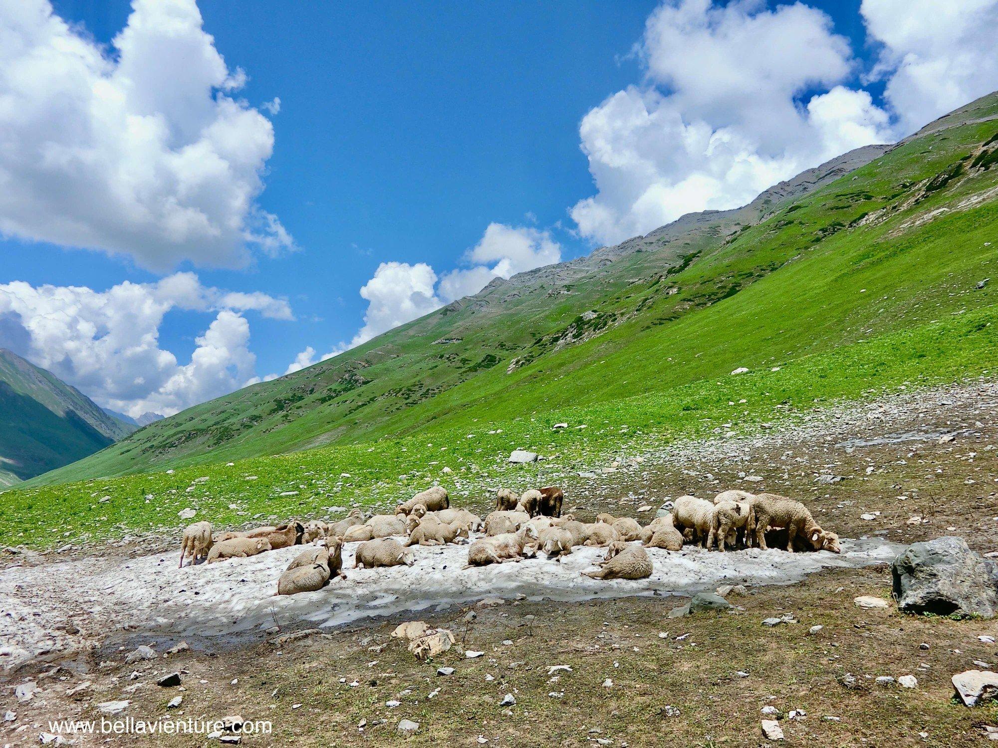 印度India 北北印 North India 喀什米爾 Kashmir 大湖健行 trekking 牧羊群 冰河