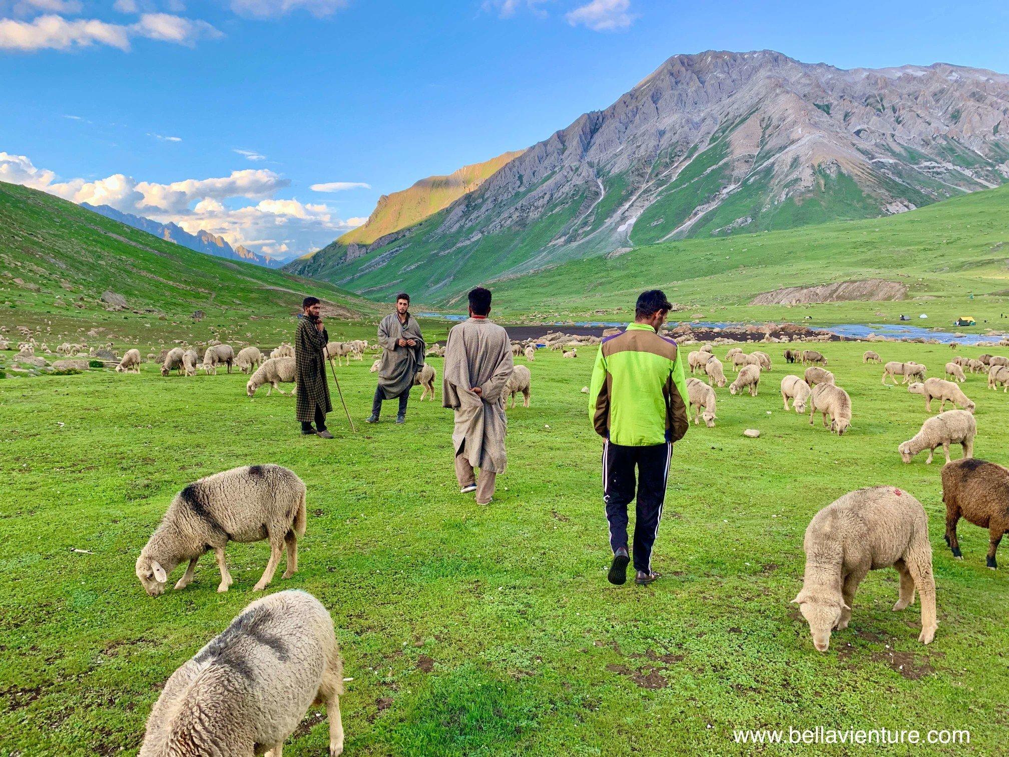 印度 India 北北印 North India 喀什米爾  Kashmir 八天七夜 健行 Nichnai Valley 牧羊人與羊群