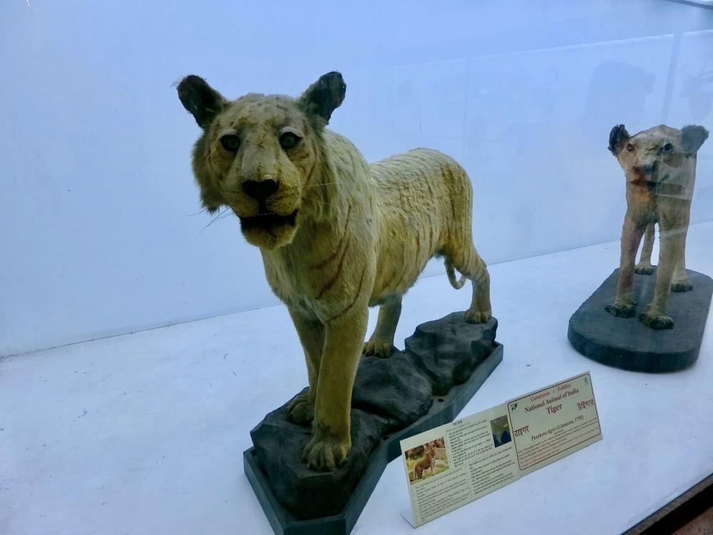 印度 加爾各答 印度博物館 標本