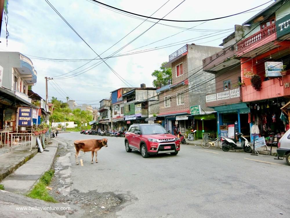 尼泊爾 波卡拉 Nepal Pokhara 民宿 Phewa lake 街道