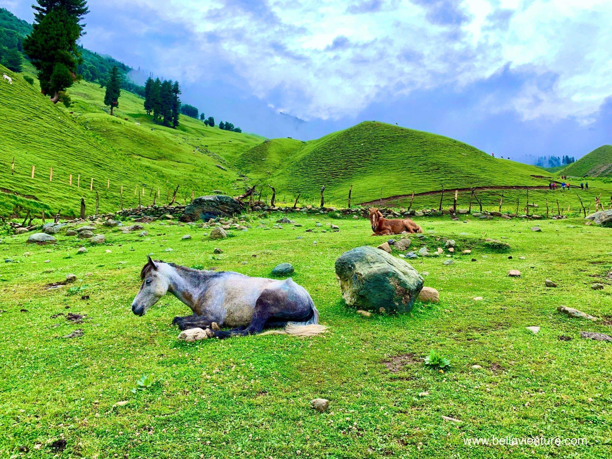 印度 India  喀什米爾 Kashmir  北北印 North India 八天七夜健行 大自然 馬群