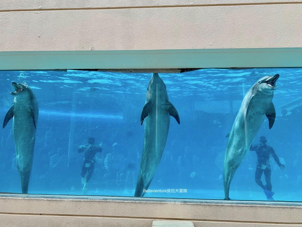 オキちゃん劇場 海豚秀 必看 沖繩 美麗海水族館
