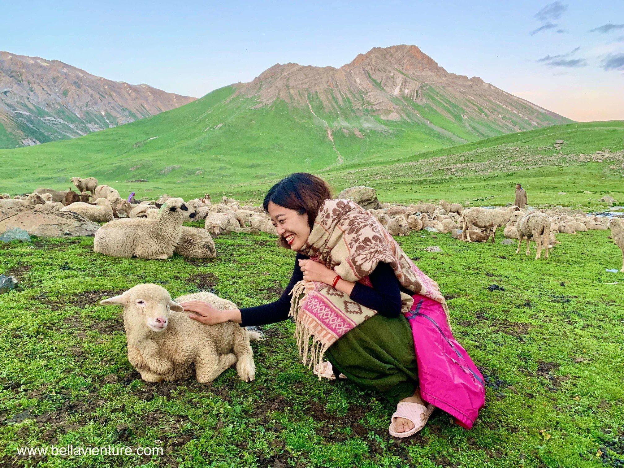 印度 India 北北印 North India 喀什米爾  Kashmir 八天七夜 健行 Nichnai Valley 溫馴的小綿羊