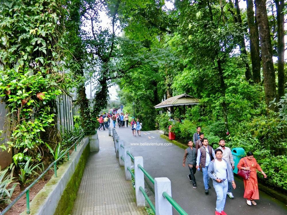 印度 大吉嶺 大吉嶺動物園 Darjiling Zoo Himalayan Mountaineering Institute