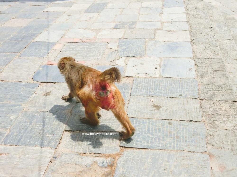 尼泊爾 加德滿都 Nepal Kathmandu 帕蘇帕提拿寺廟Pashupatinath Temple  猴子