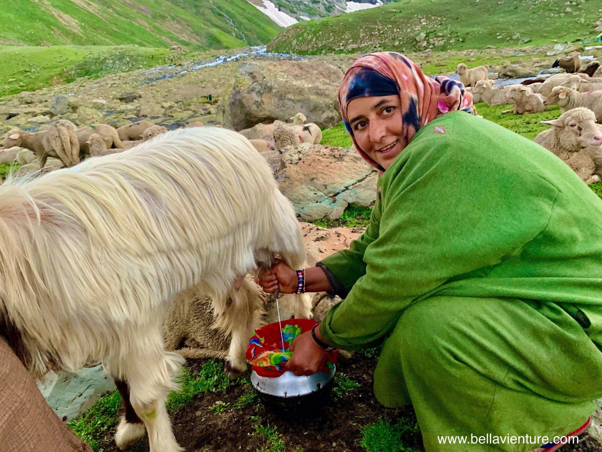 印度 India 北北印 North India 喀什米爾  Kashmir 八天七夜 健行 Nichnai Valley 示範擠羊奶的牧羊女