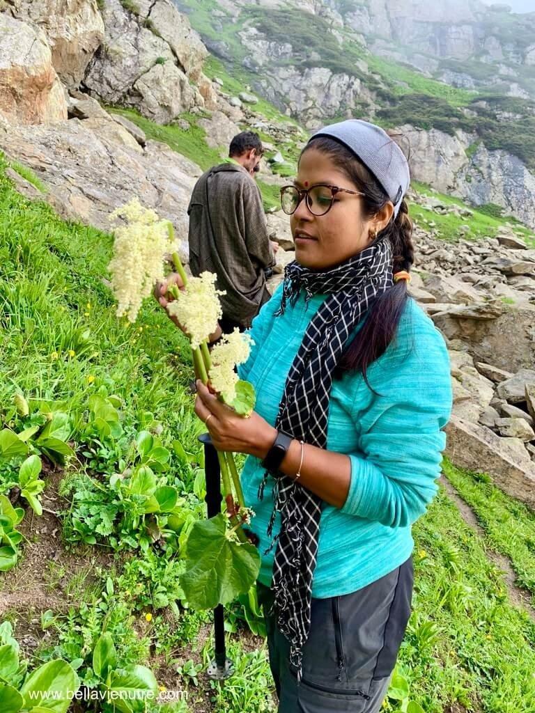 印度 India 北北印  North India 喀什米爾 Kashmir 大湖健行 trekking Kashmir Great Lakes Trek 野菜採集