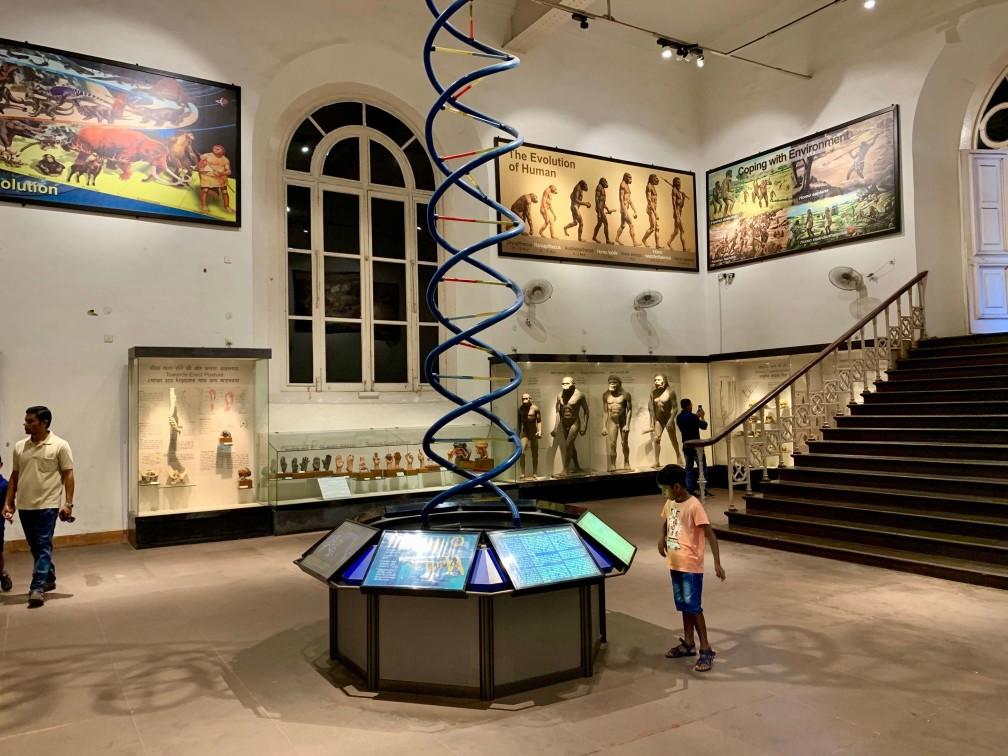 印度 加爾各答 印度博物館 DNA區