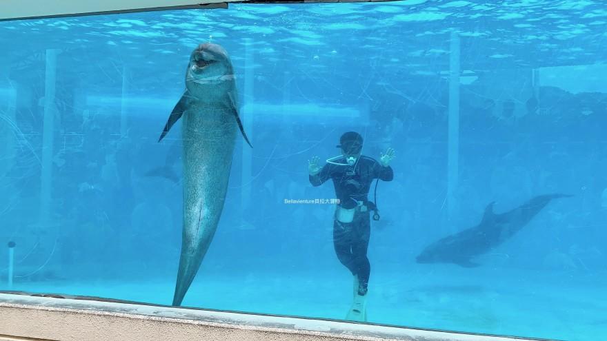 海豚秀 オキちゃん劇場 沖繩 美麗海水族館 必看