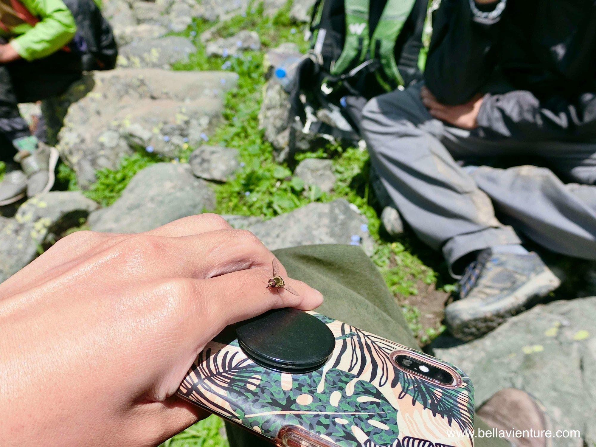 印度India 北北印 North India 喀什米爾 Kashmir 大湖健行 trekking 蜜蜂 大自然