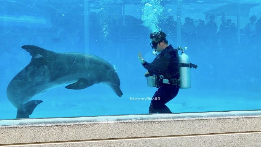 オキちゃん劇場 沖繩 美麗海水族館 海豚秀 必看