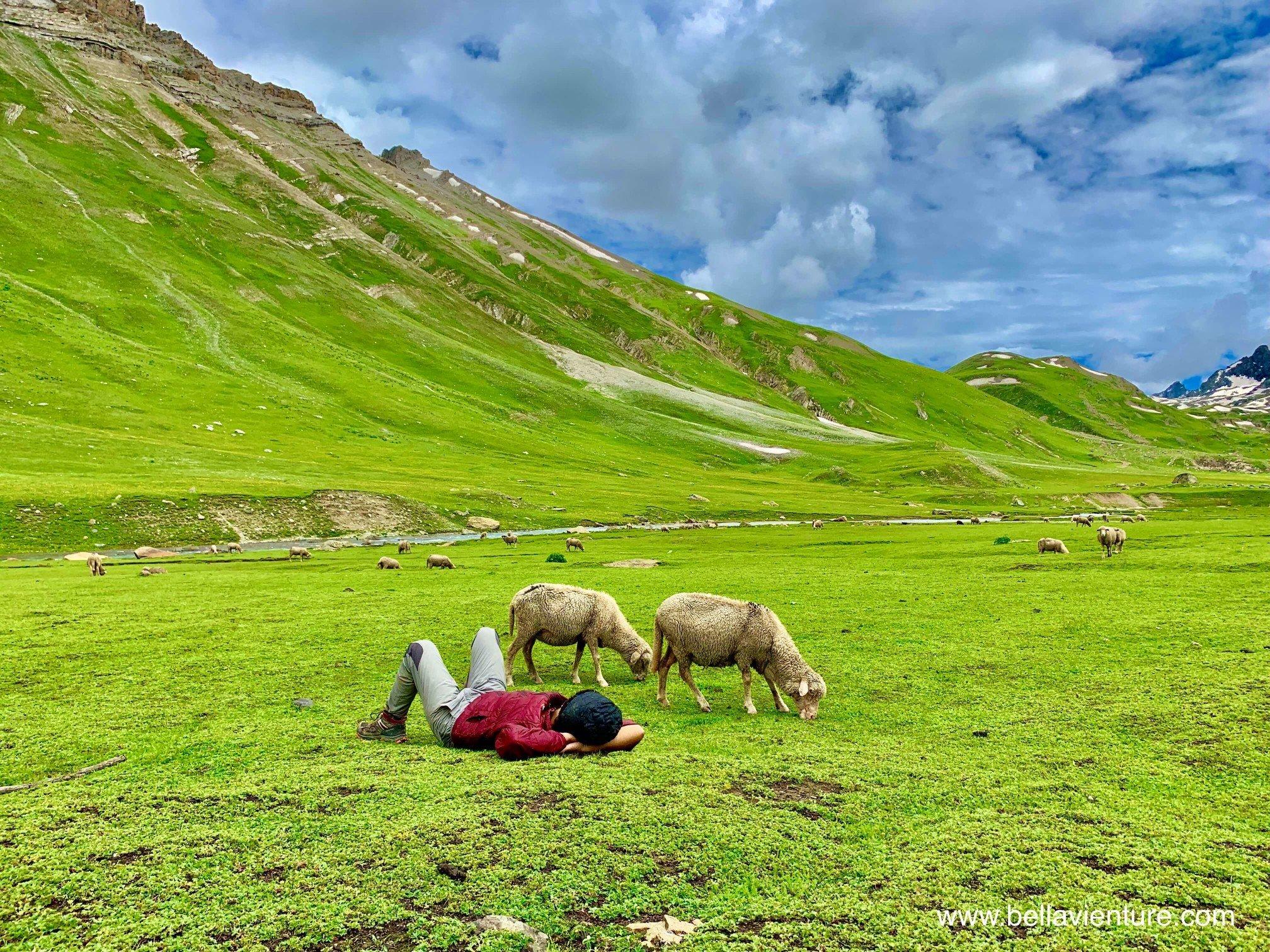 印度 India 北北印 North India 喀什米爾  Kashmir 八天七夜 羊群與午睡的印度團員