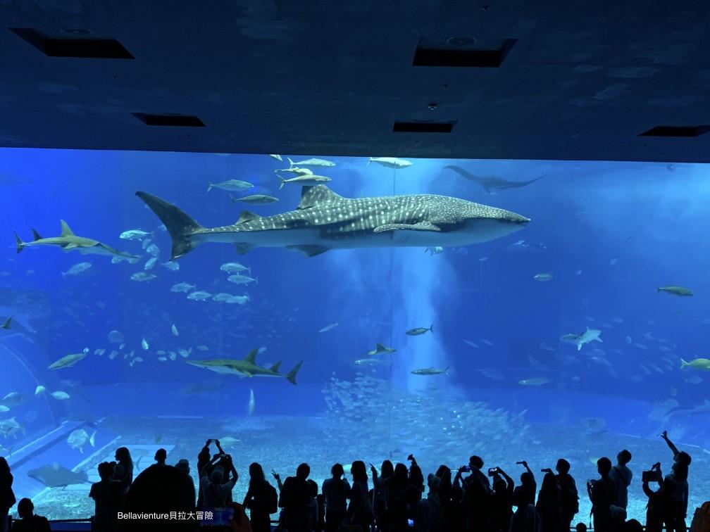 沖繩 美麗海水族館 鯨鯊