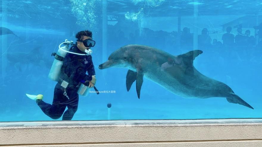 オキちゃん劇場 海豚秀 必看 沖繩美麗海水族館