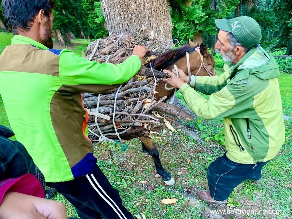 印度 india 喀什米爾 kashmir 大湖健行big lake trekking 把枯枝捆在馬匹上