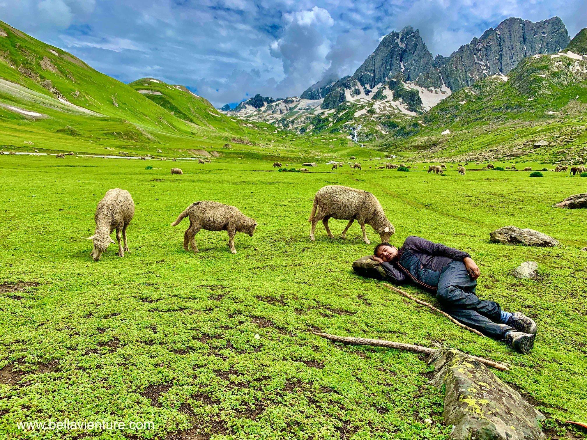 印度 India 北北印 North India 喀什米爾  Kashmir 八天七夜 健行 綿羊與午睡的印度團員