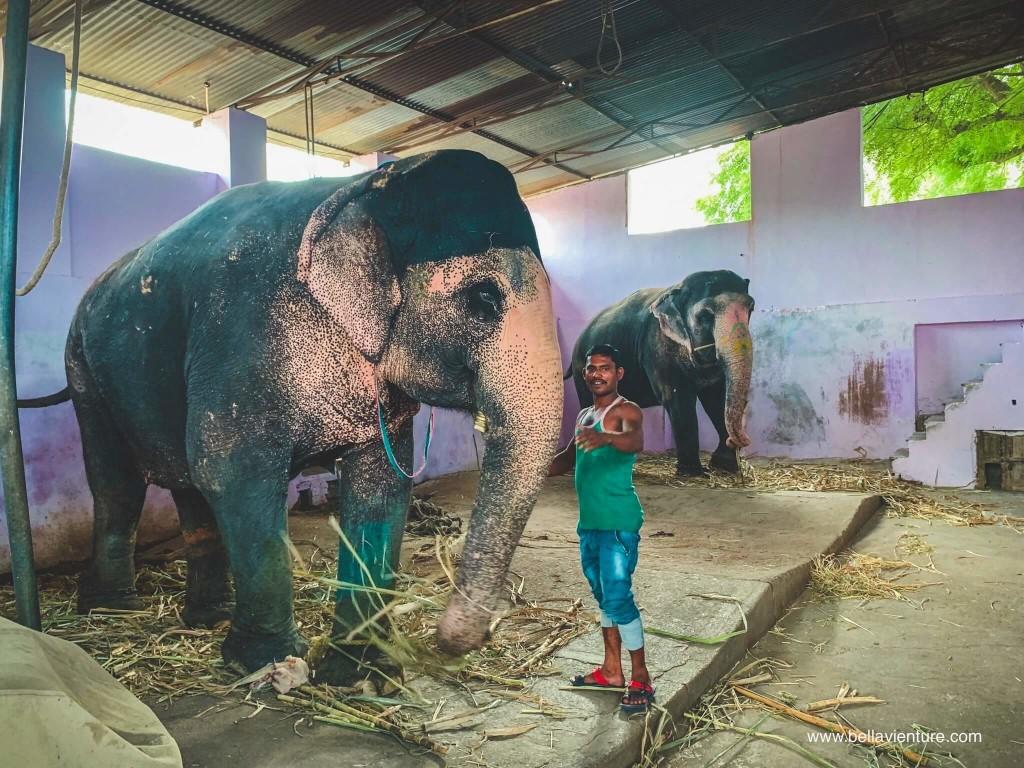印度 india  齋浦爾 jaipur 大象之家 elephant