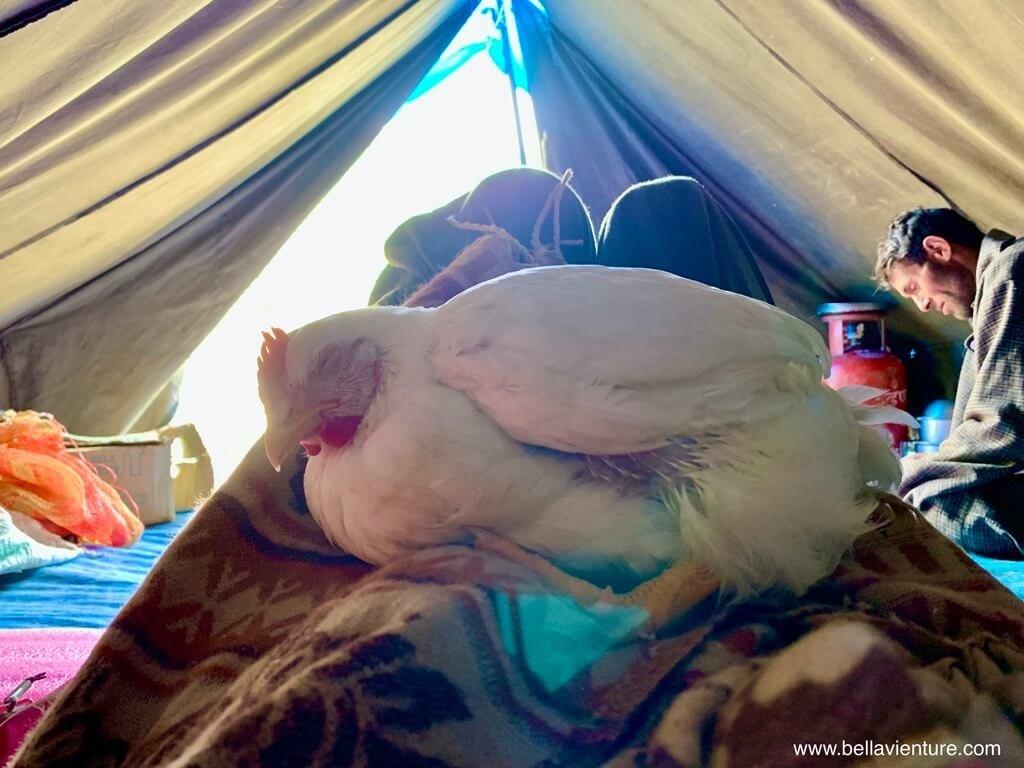 印度 india 喀什米爾 kashmir 大湖健行big lake treakking 愛睡覺的母雞