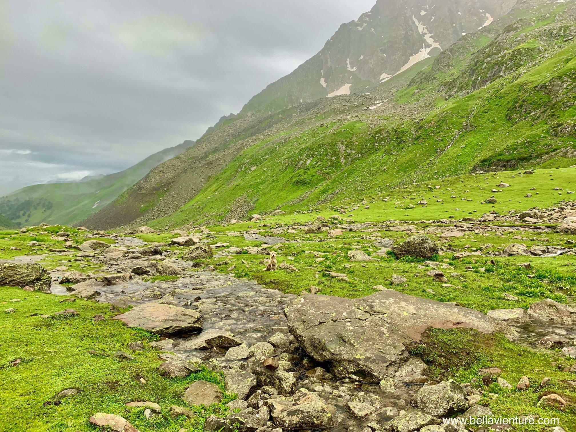 印度 India  喀什米爾 Kashmir  北北印 North India 八天七夜健行 大自然 美景 狗