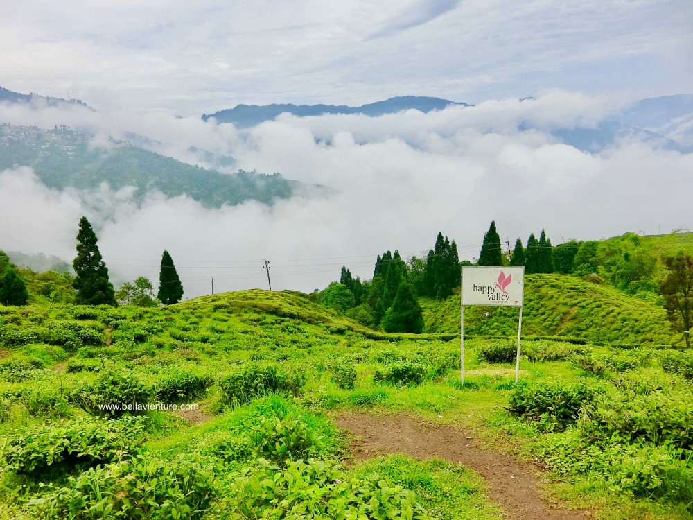 印度 大吉嶺 快樂谷茶園 紅茶 Darjeeling india
