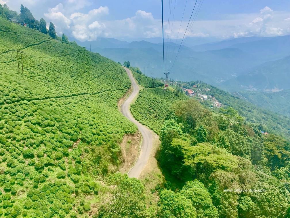 印度 大吉嶺 茶園 纜車 Darjeeling Rangeet Valley Passenger Ropeway