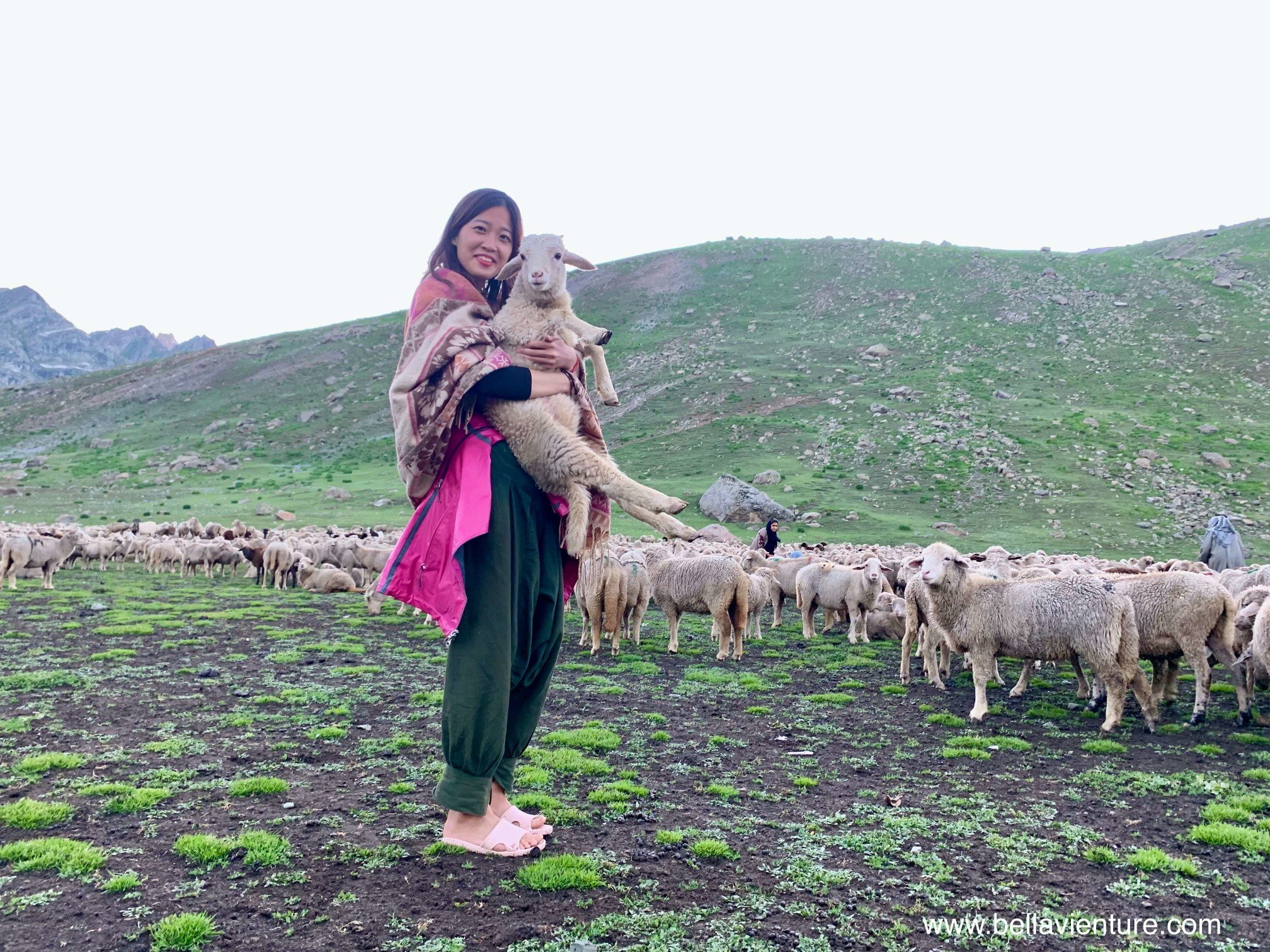 印度 India 北北印 North India 喀什米爾  Kashmir 八天七夜 健行 Nichnai Valley 與小綿羊合影