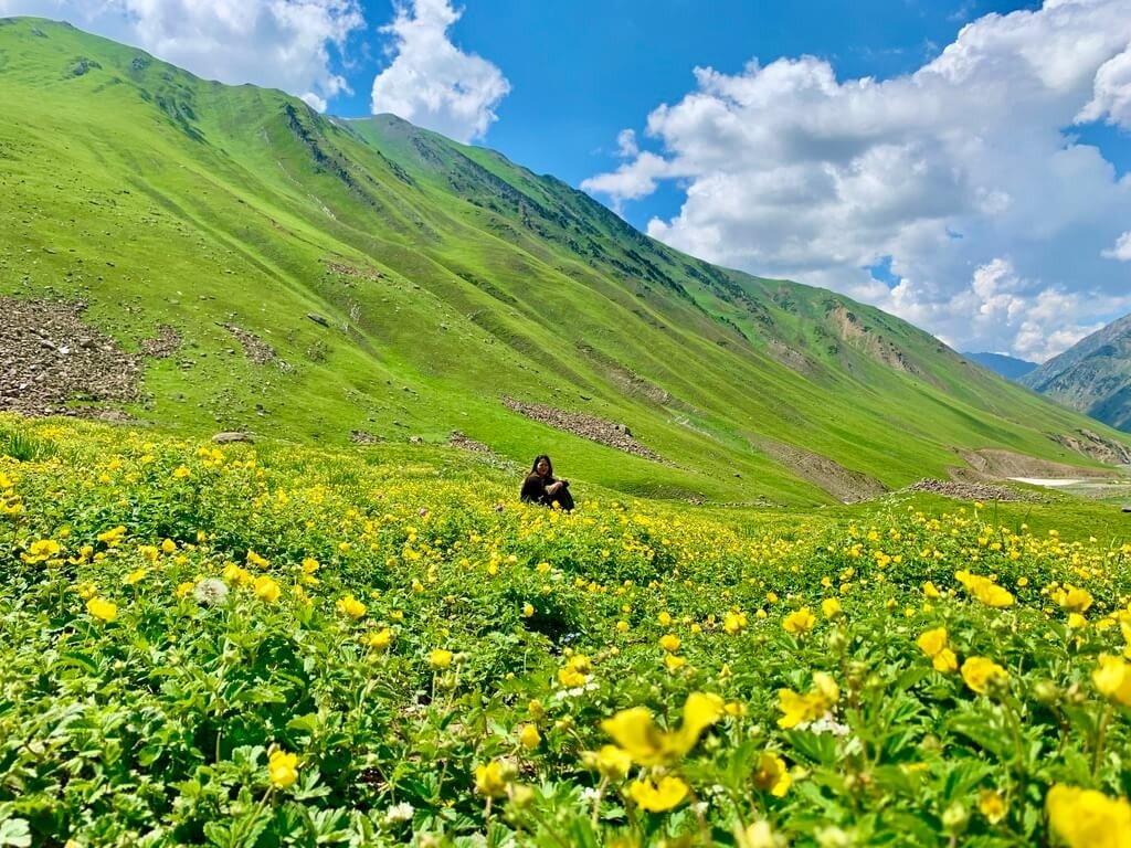 印度India 北北印 North India 喀什米爾 Kashmir 大湖健行 trekking 滿山黃花