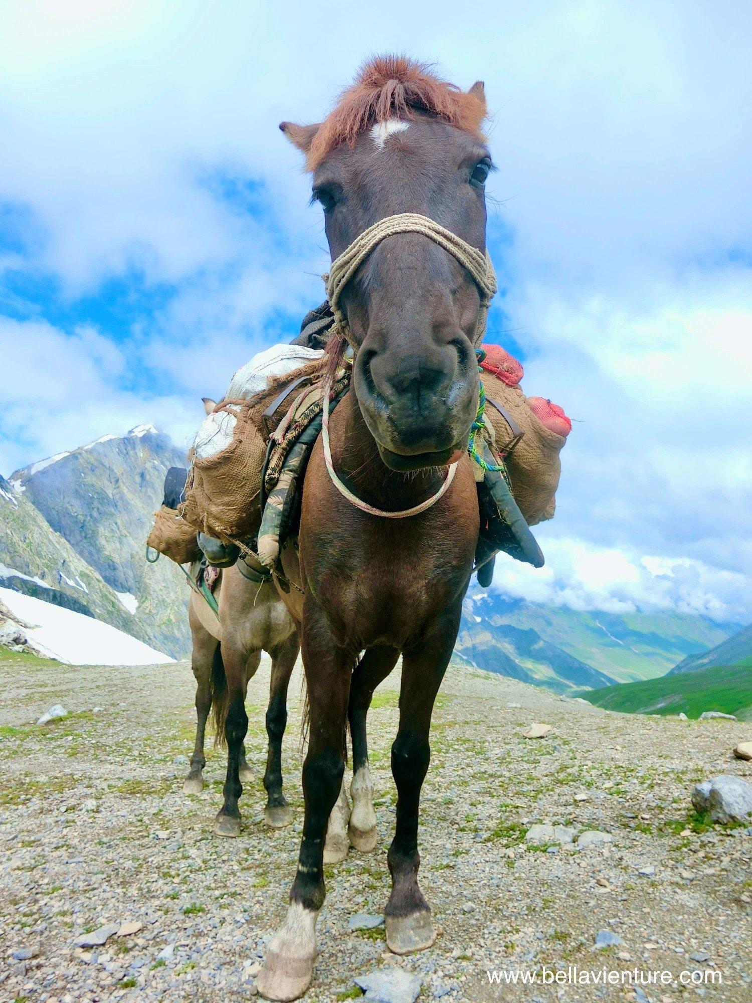 印度India 北北印 North India 喀什米爾 Kashmir 大湖健行 trekking 馬匹