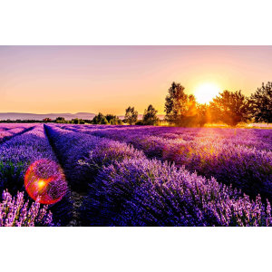 【Personal Growth】Life Colors, what the colors in your aura reveal- Emotional Life Color - LAVENDER (13)