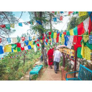 【印度】21天秒決定到印度兩個月!達蘭薩拉(二) Day29 達賴喇嘛長壽法會.導航亂導西藏圖書館.博物館一遊